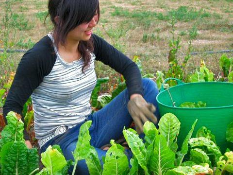 giovani_agricoltura