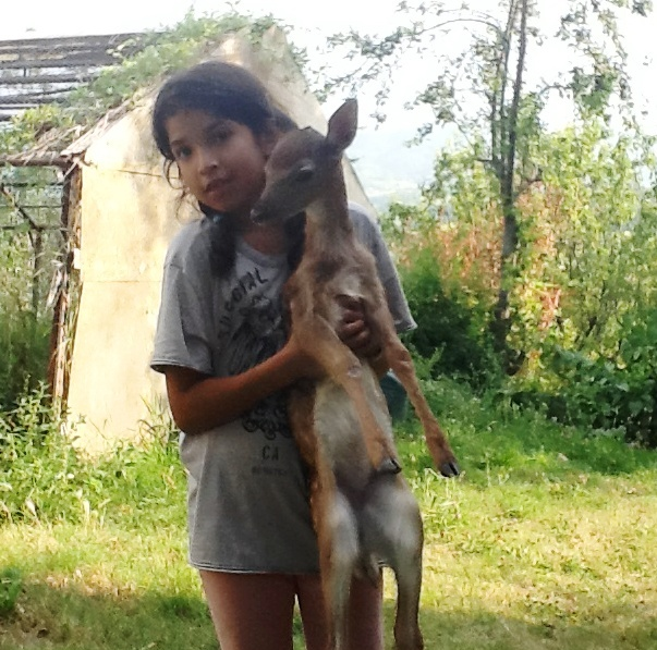 Cucciolo di cerbiatto salvato e adottato da una bambina nell'oltrepò pavese
