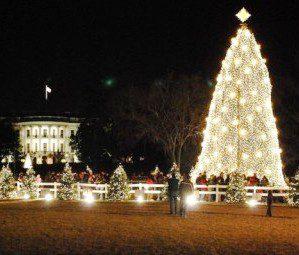 USA: alla Casa Bianca un albero di Natale a risparmio energetico