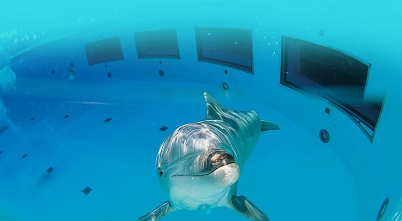 Stop agli spettacoli con delfini nel parco divertimenti più grande d'Italia