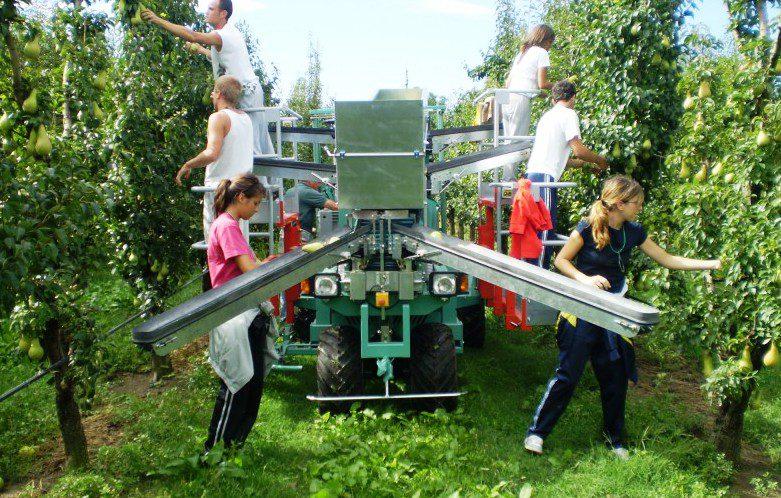 Lavoro: grazie ai nuovi voucher, molti più giovani in agricoltura