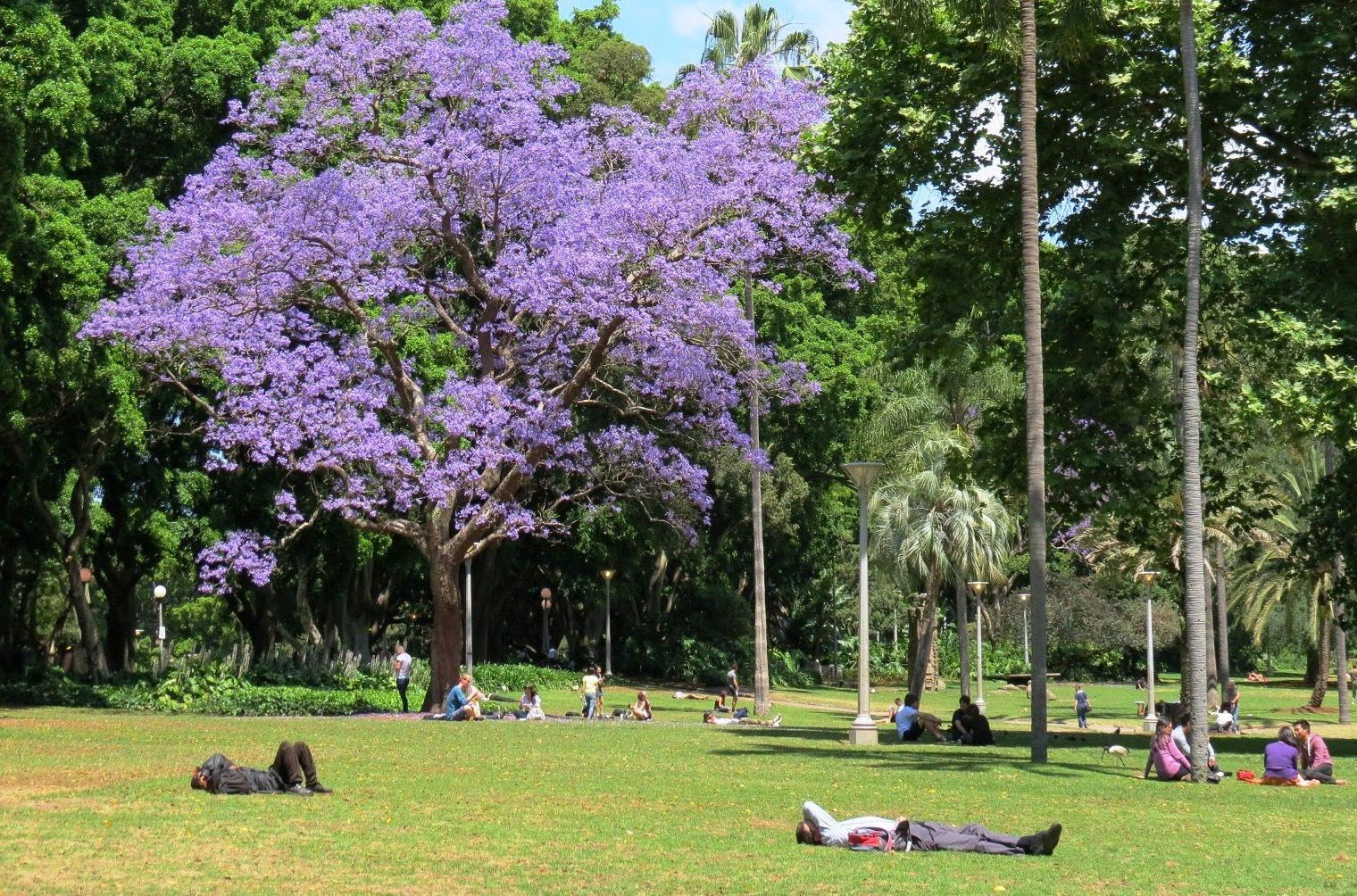 Piantare alberi per contrastare l'inquinamento delle città