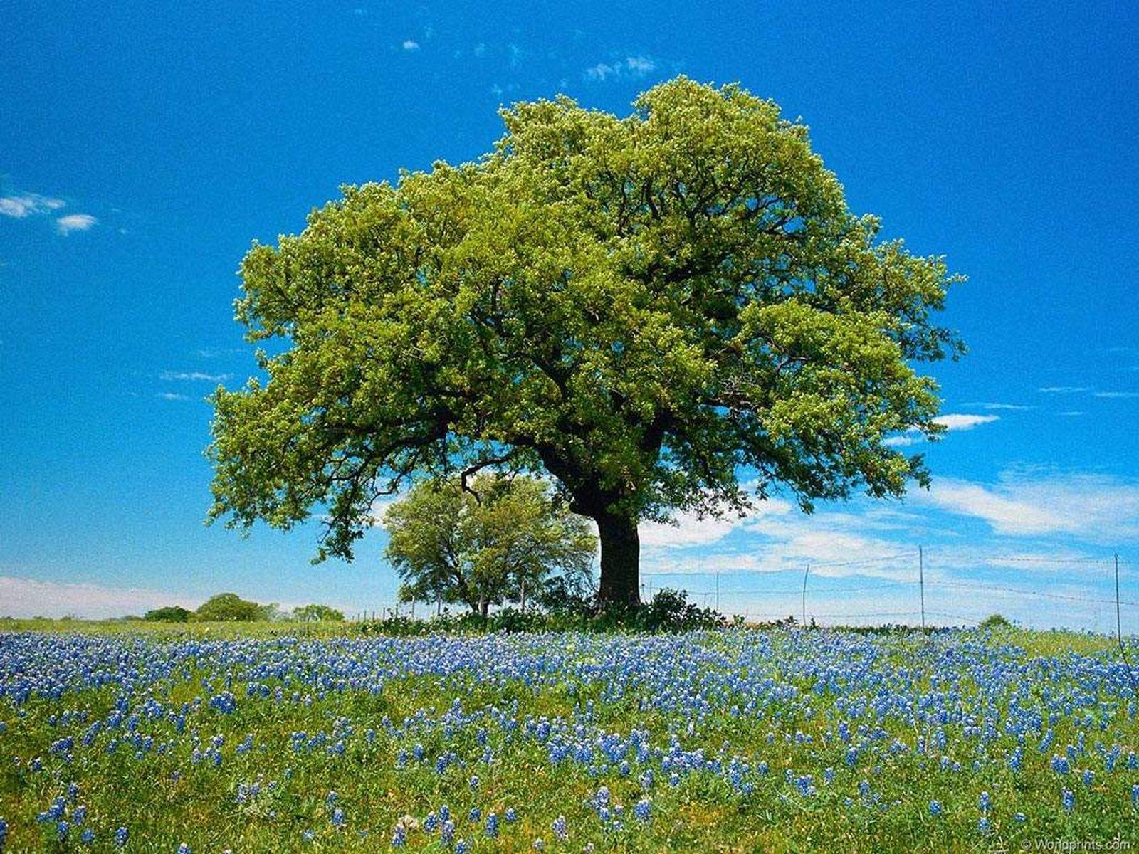 Un albero per ogni bambino nato nei comuni sopra i 15mila abitanti