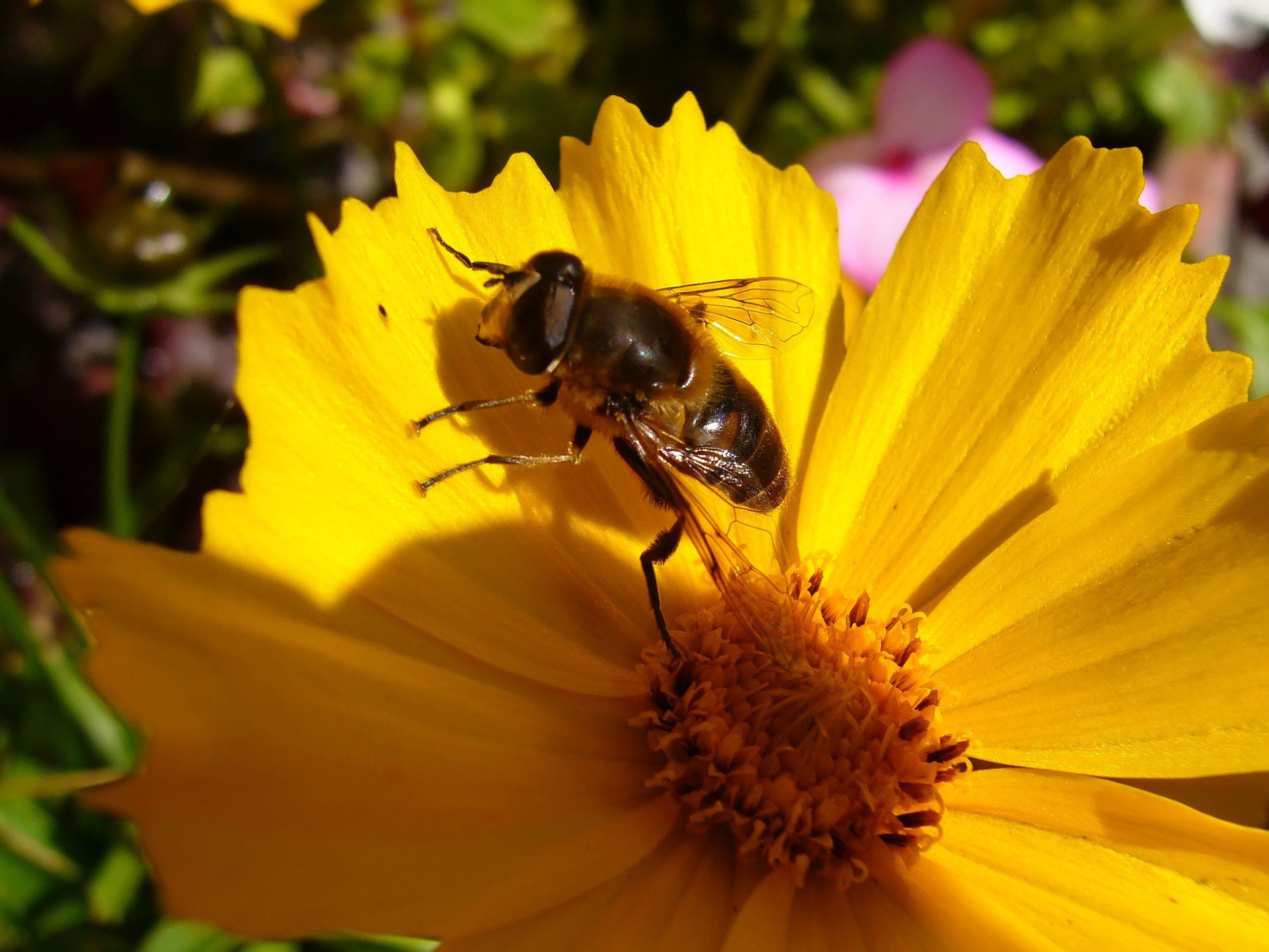L'Unione Europea in difesa delle api