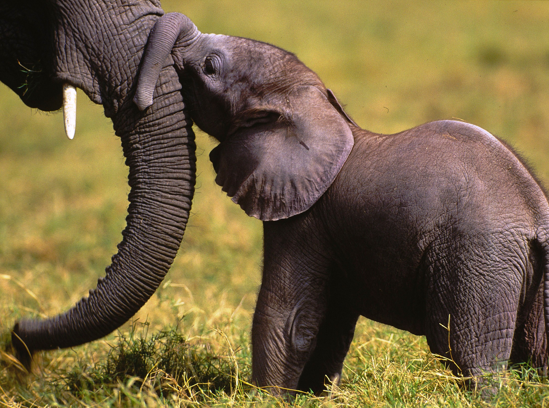 Al via campagna internazionale contro commercio illegale di fauna selvatica