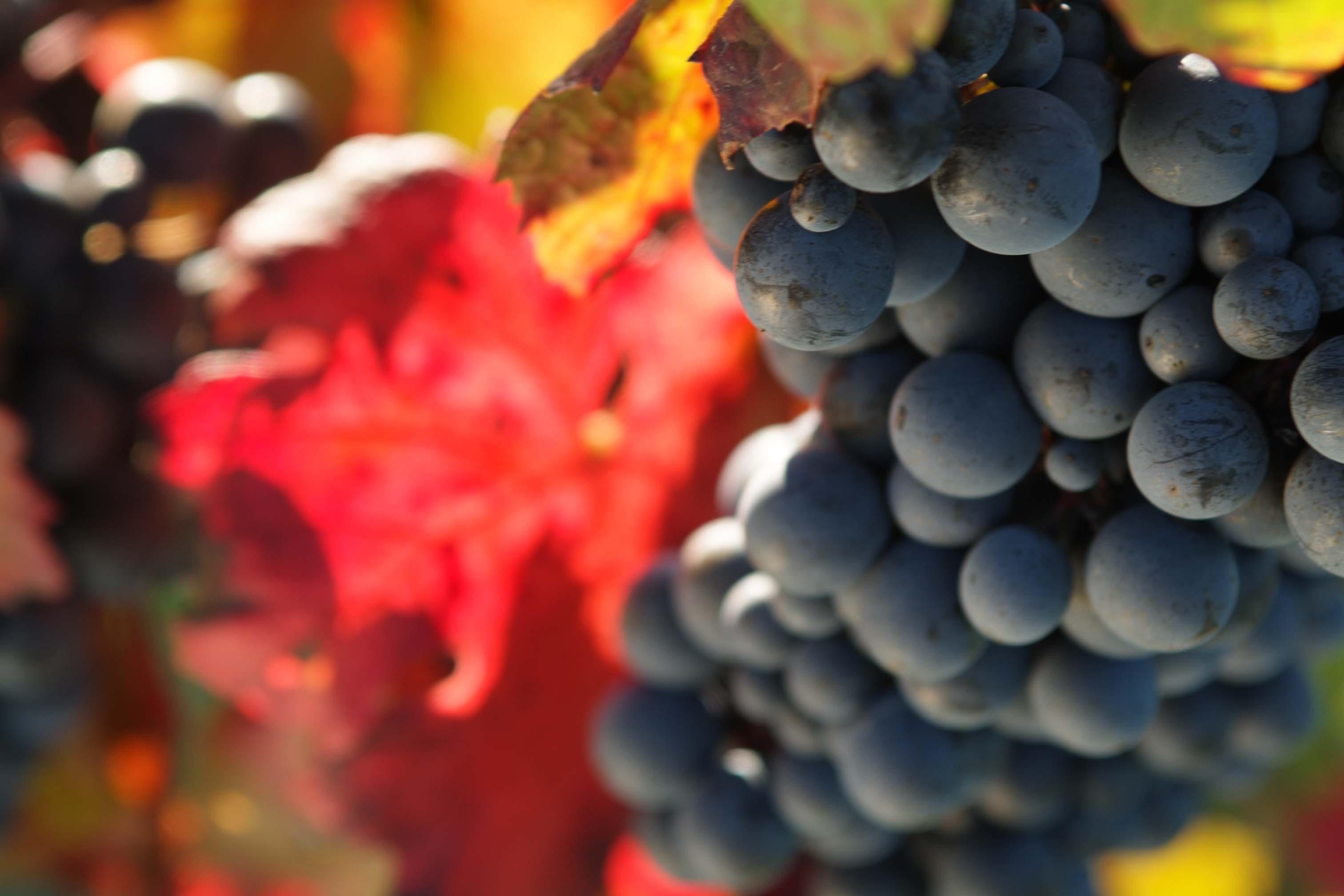 Semplificare l'agricoltura biologica, l'Ue consulta i produttori