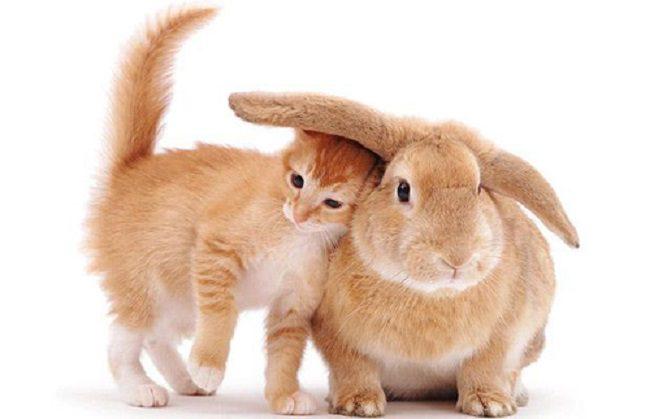 coniglio accarezza micio