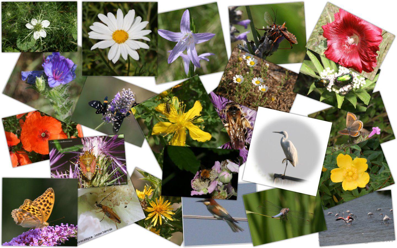 Festival della Biodiversità: tutti gli appuntamenti da non perdere