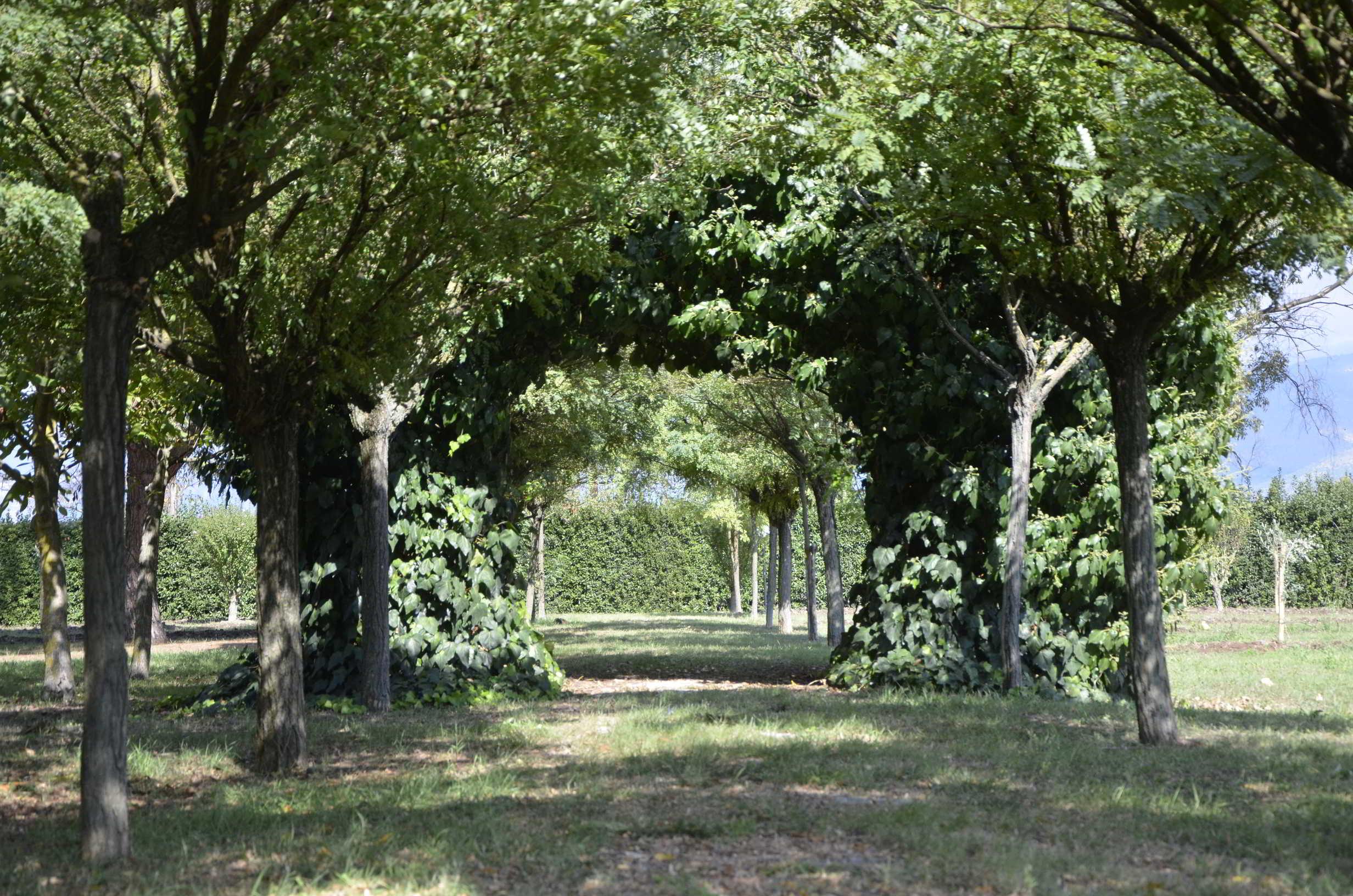 300 alberi nel segno dell'arte
