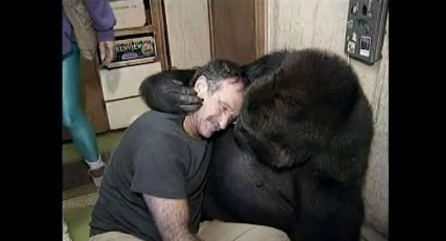 Robin-Williams-Meets-Koko-the-Gorilla-05
