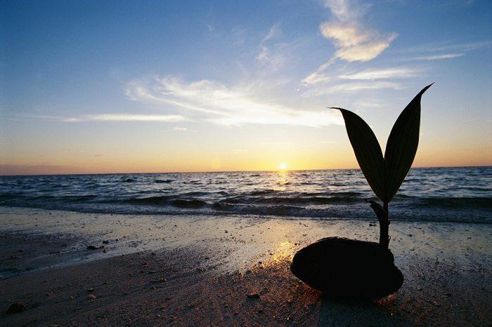 L'orto del futuro? Crescerà nel mare