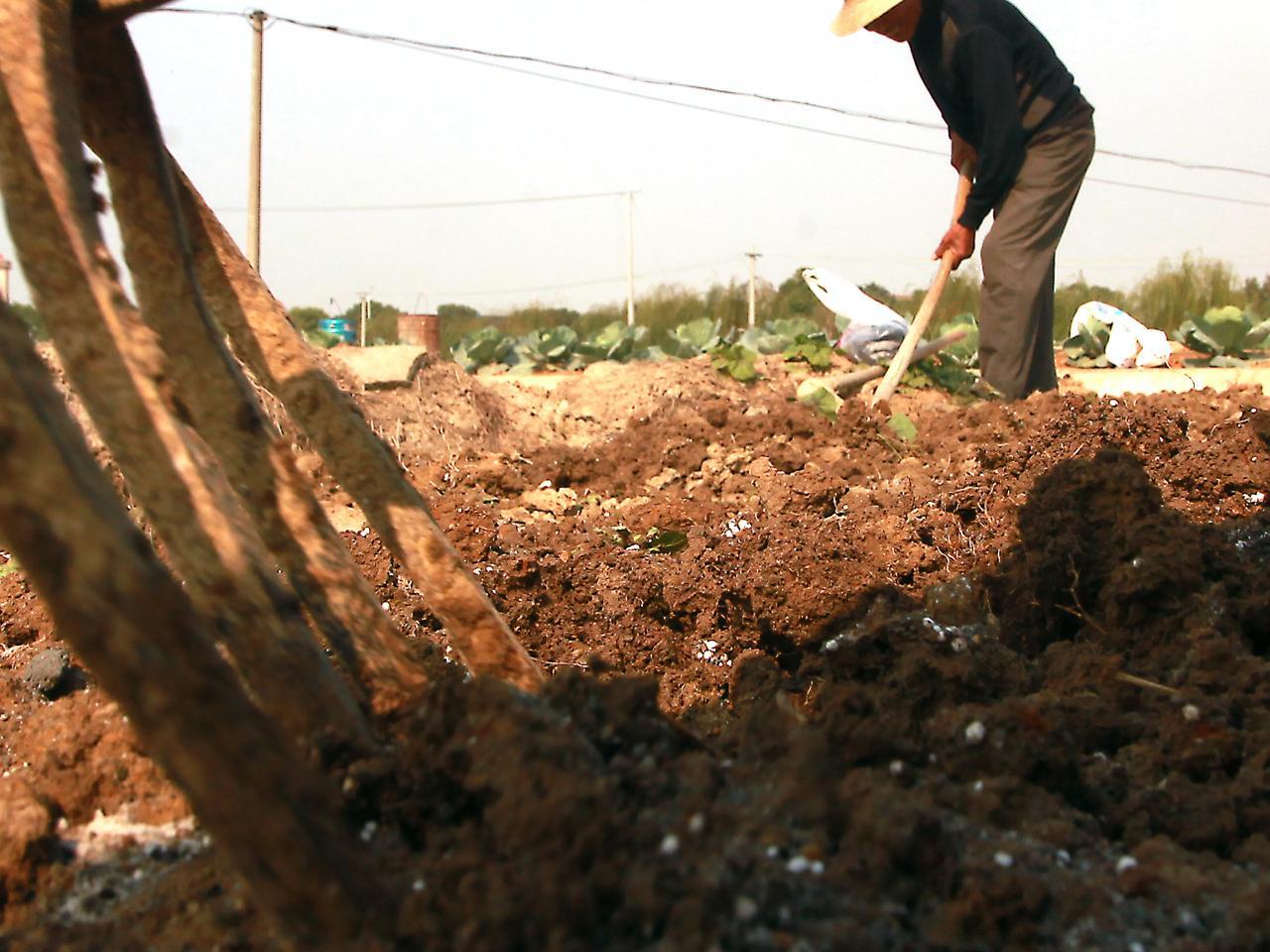 Agricoltura: in arrivo un database per i Paesi con scarsità d'acqua