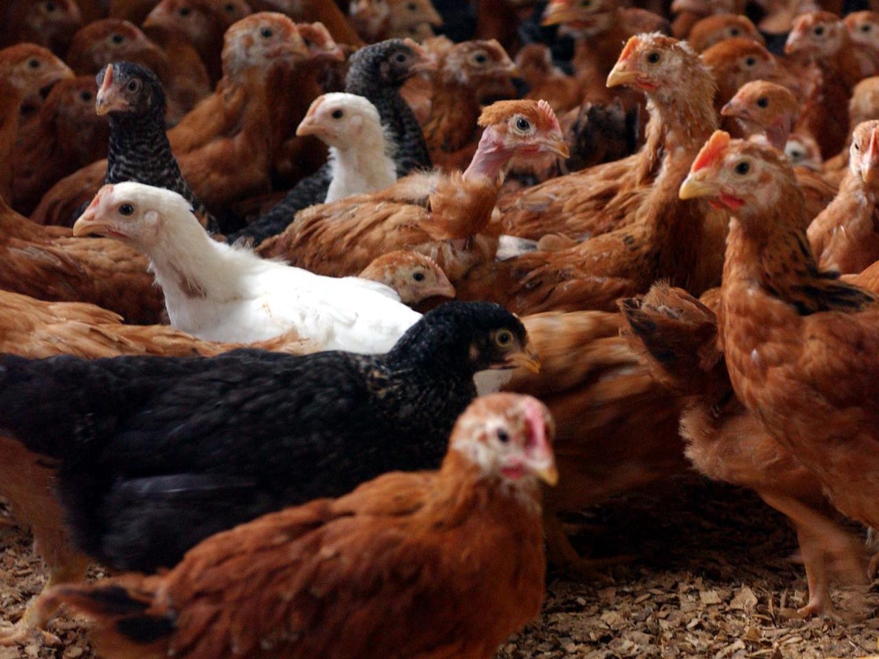 Sostenibilità: Ferrero, Fumagalli e ValVerde premiate per il benessere animale