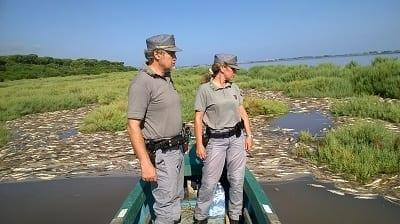 Allarme meteo in laguna Orbetello, in 3 giorni 200 tonnellate di pesce morto