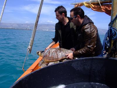 A Manfredonia, la 'clinica' delle tartarughe. 500 recuperate dal 2012
