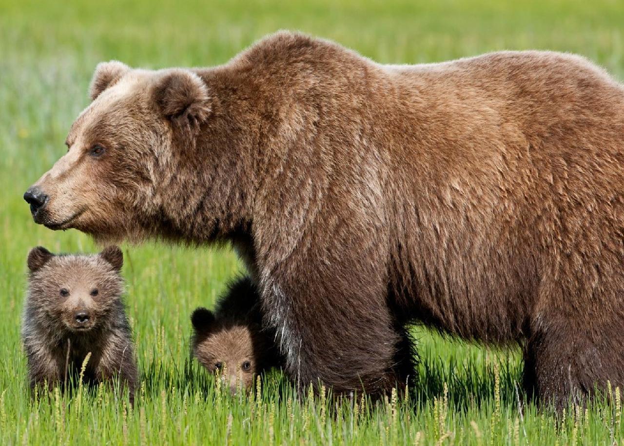 Animali: Frattini, Galletti tuteli specie protette non cacciatori