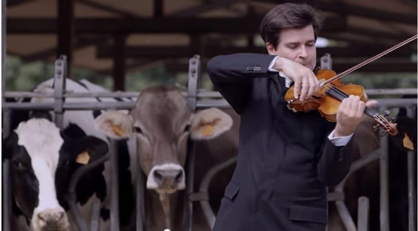 Animali: concerto per sole mucche a Cremona e il latte cambia 'tono'