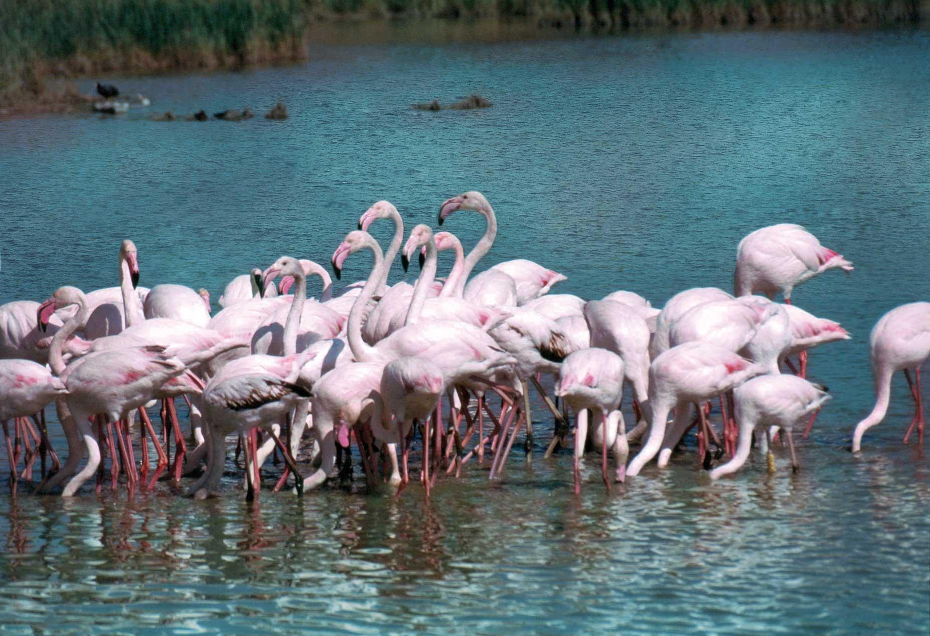 Di tutti i Delta un Po: settembre invita al viaggio fra i canali e le isole del Parco. E a Comacchio è gran festa per l'anguilla
