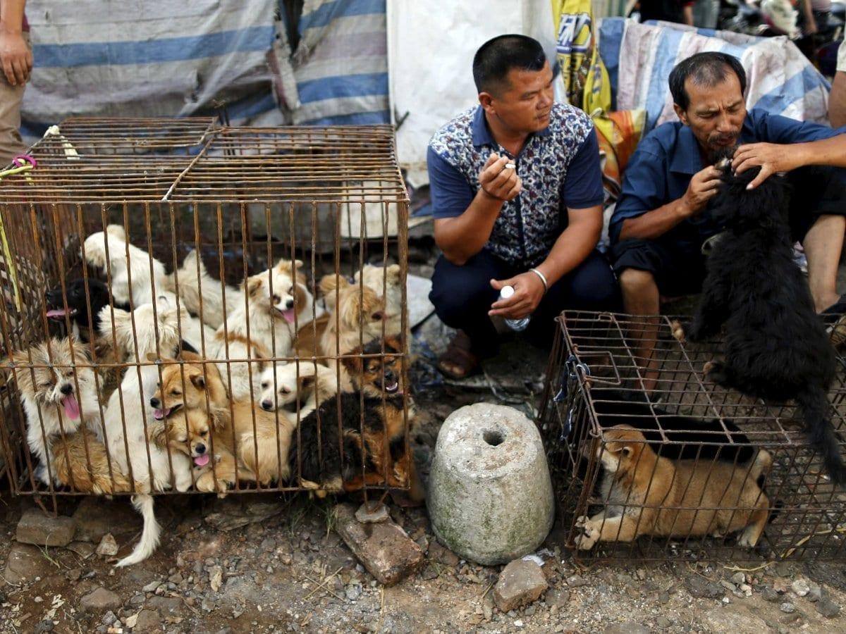 Wang Yan, il milionario cinese che ha speso tutta la sua fortuna per salvare i cani dal macello