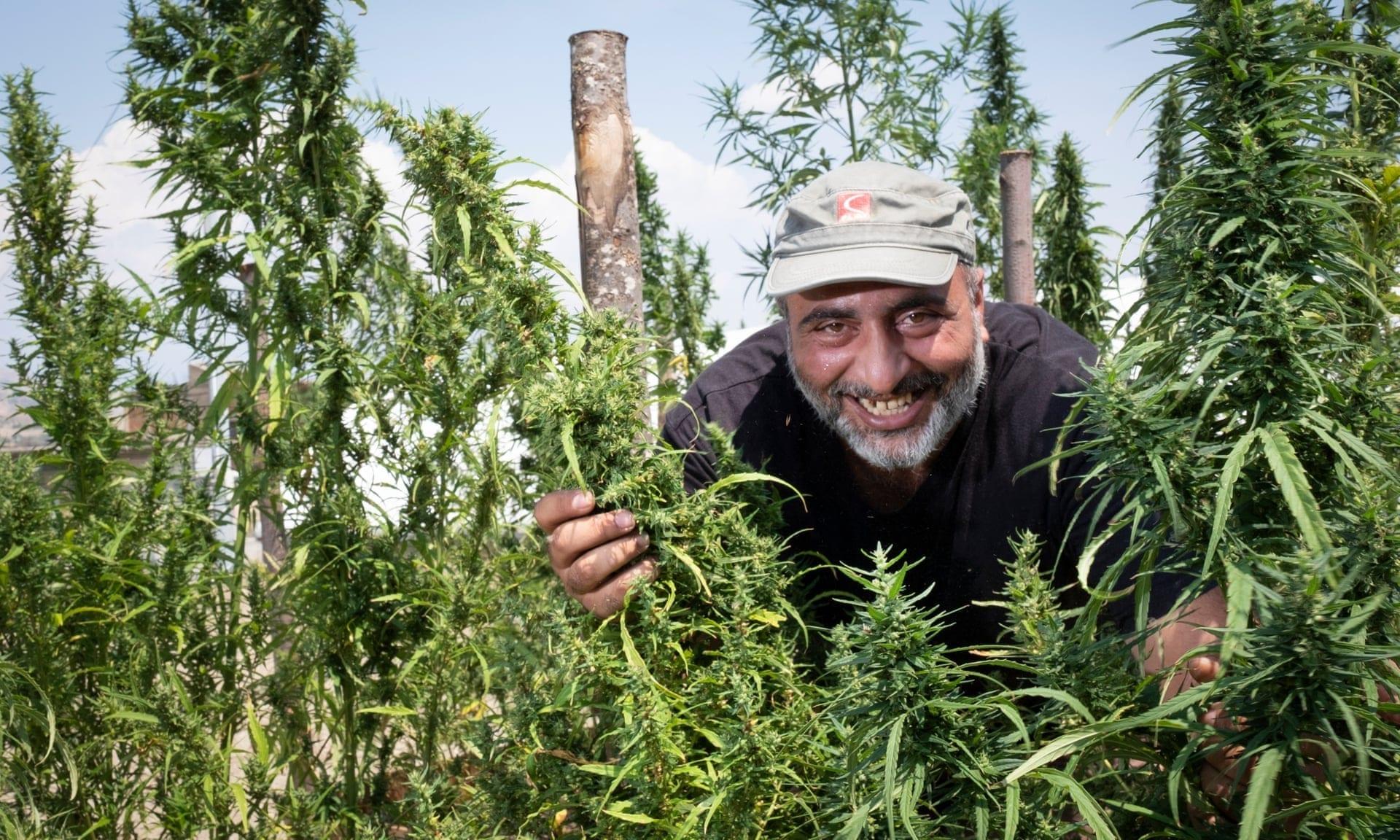 Dal grano alla canapa: così gli agricoltori italiani si sono salvati dalla crisi