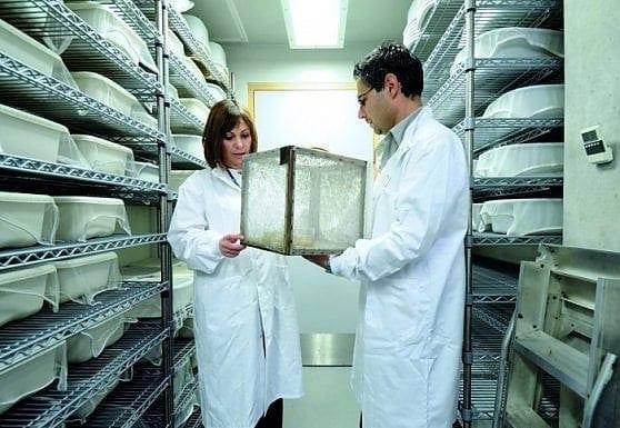 Trovato un metodo per sterminare le zanzare
