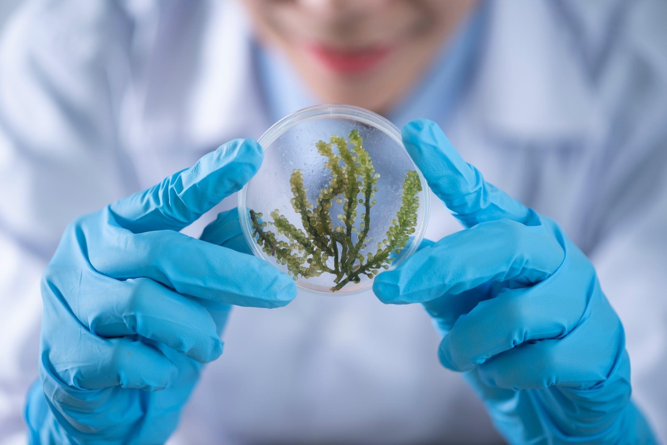 Covid 19, biodiversità ed equilibri naturali. Biologo tiene in mano campioni vegetali in sfera di vetro