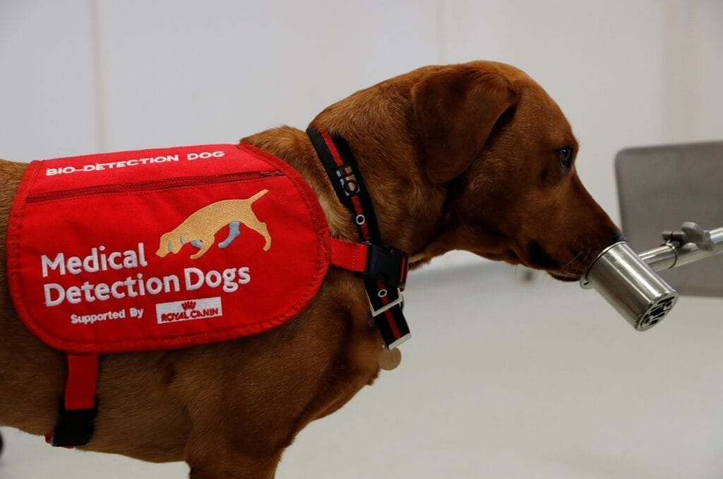 L'olfatto dei cani da la caccia al Coronavirus, tutto al riguardo, L'olfatto dei cani contro il Coronavirus, tempi ed efficacia messi a confronto con il metodo del tampone